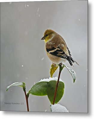Yellow Finch Metal Print by Denise Romano
