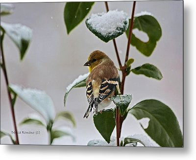 Yellow Finch On Branch Metal Print by Denise Romano