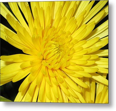 Yellow Flower Closeup Metal Print