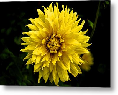 Yellow Flower Metal Print by Matt Harang