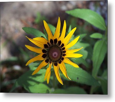 Yellow Flower Metal Print by Michele Kaiser