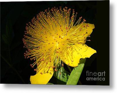 Yellow Flower Metal Print by Nur Roy