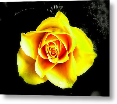 Yellow Flower On A Dark Background Metal Print