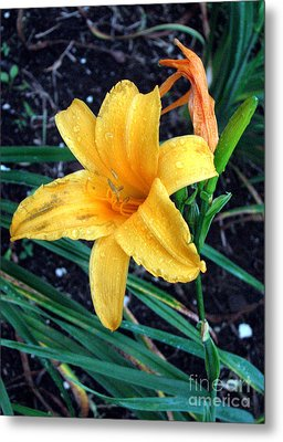 Metal Print featuring the photograph Yellow Flower by Sergey Lukashin