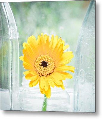 Yellow Flower Metal Print by Tom Gowanlock