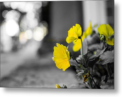 Yellow Flowers Metal Print by Nathan Hillis