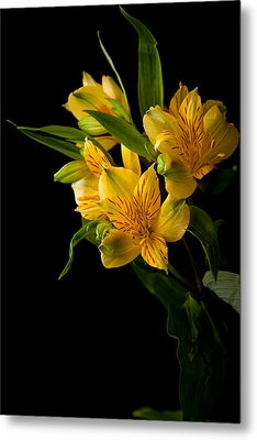 Metal Print featuring the photograph Yellow Flowers by Sennie Pierson