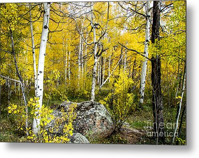Yellow Forest Metal Print