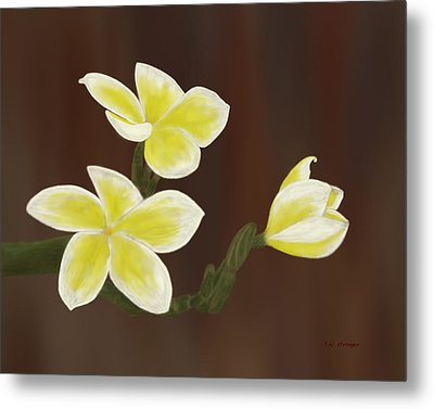 Yellow Frangipani Metal Print by Tim Stringer