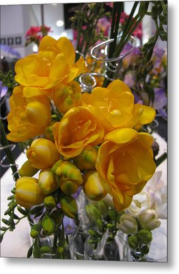 Yellow Freesia Metal Print by Alfred Ng