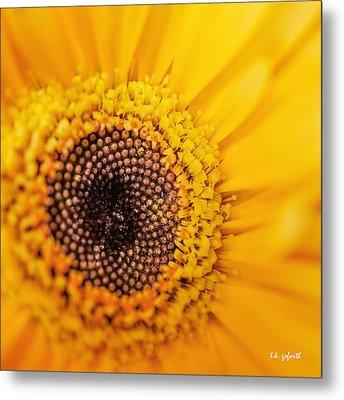 Yellow Gerbera Squared Metal Print by TK Goforth