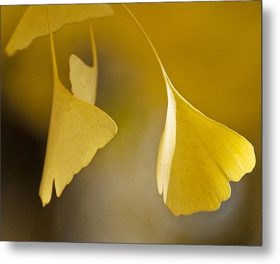 Yellow Ginkgo Metal Print by Sally Ross