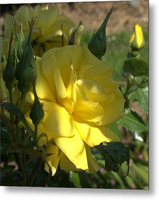 Metal Print featuring the photograph Yellow Grace by Suzy Piatt