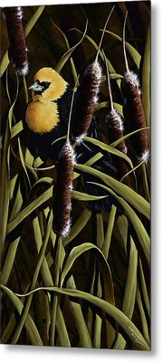 Yellow Headed Blackbird And Cattails Metal Print by Rick Bainbridge