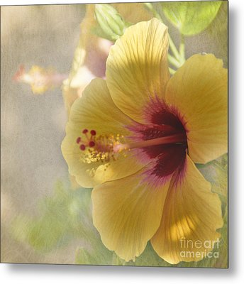 Yellow Hibiscus Metal Print by Peggy Hughes