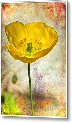Yellow Icelandic Poppy And Texture Metal Print