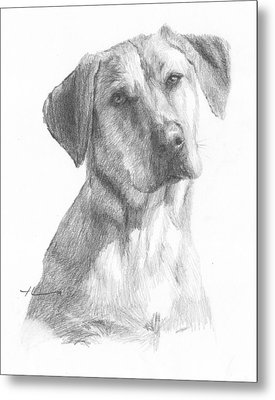 Yellow Lab Dog Pencil Portrait Metal Print by Mike Theuer