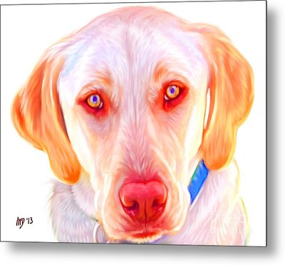 Yellow Labrador Dog Art With White Background Metal Print by Iain McDonald