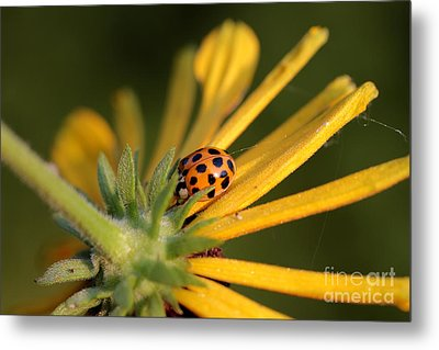 Metal Print featuring the photograph Yellow Lady - 2 by Kenny Glotfelty