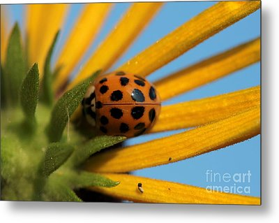 Metal Print featuring the photograph Yellow Lady Bug - 5 by Kenny Glotfelty
