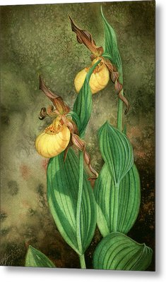 Yellow Lady's Slippers Metal Print