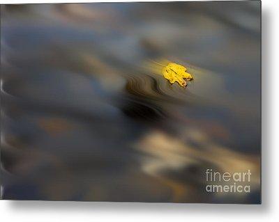 Yellow Leaf Floating In Water Metal Print by Dan Friend