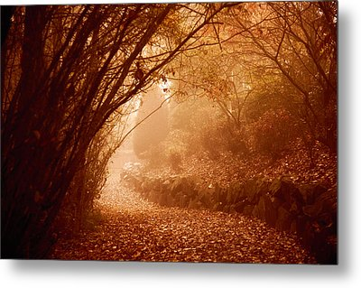 Yellow Leaf Road Metal Print