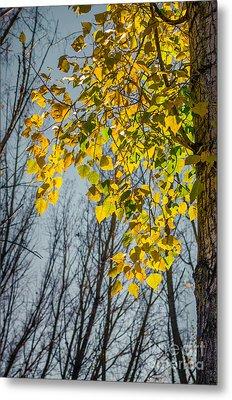 Yellow Leaves Metal Print by Carlos Caetano