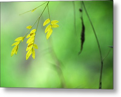 Yellow Leaves Metal Print by Guido Montanes Castillo