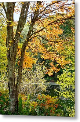 Metal Print featuring the photograph Yellow Leaves by Janice Drew