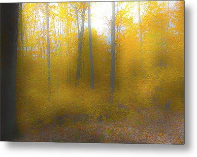 Yellow Leaves Metal Print by Jim Baker