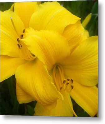 Yellow Lily Metal Print by Saribelle Rodriguez