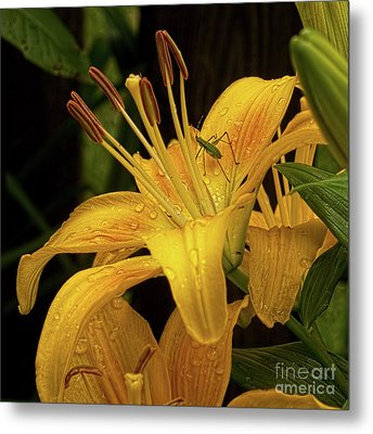 Metal Print featuring the photograph Yellow Lily With Bug by Michael Flood