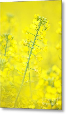 Yellow Makes Me Happy Metal Print by Angela Doelling AD DESIGN Photo and PhotoArt
