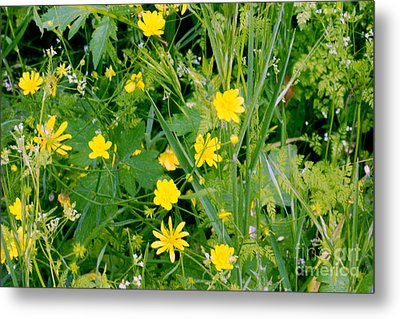 Metal Print featuring the photograph Yellow Monkey Flowers by Gary Brandes