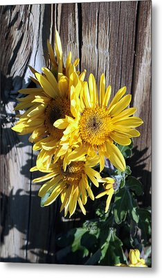Yellow Mum Metal Print