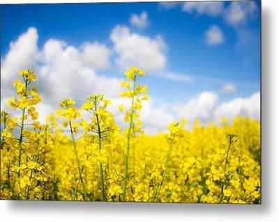 Yellow Mustard Field Metal Print