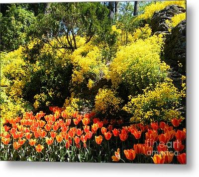 Yellow Orange - Springtime Metal Print by Phil Banks