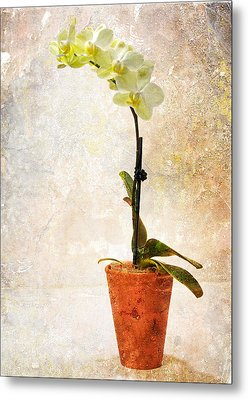 Yellow Orchid Metal Print by Patti Deters