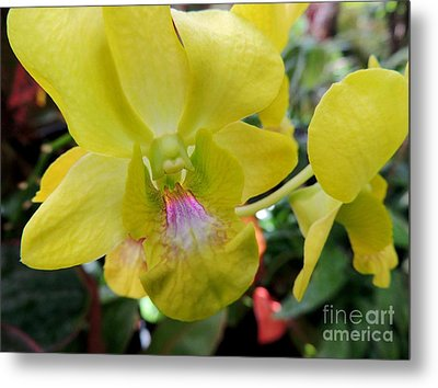 Metal Print featuring the photograph Yellow Orchid by Kristine Merc
