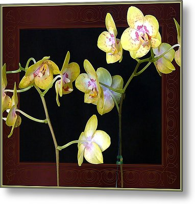 Yellow Orchids Metal Print by Mindy Newman