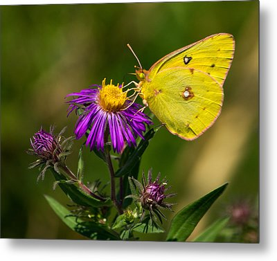 Yellow Over Purple Metal Print by Jose Oquendo