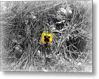Metal Print featuring the photograph Yellow Pansy by Tara Potts