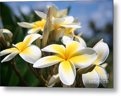 Yellow Plumeria Metal Print