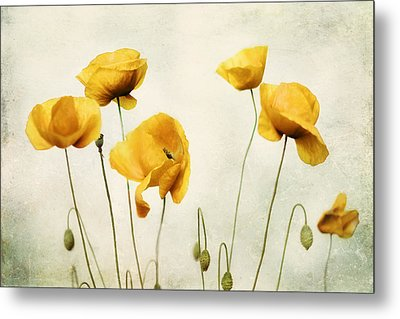 Yellow Poppy Photography - Yellow Poppies - Yellow Flowers - Olive Green Yellow Floral Wall Art Metal Print
