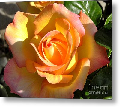 Metal Print featuring the photograph Yellow Rose Bud by Debby Pueschel