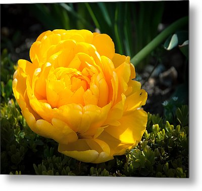 Metal Print featuring the photograph Yellow Rose by Dee Dee  Whittle