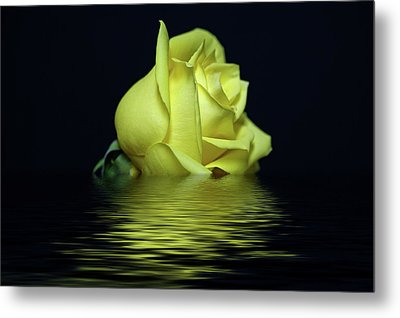 Yellow Rose II Metal Print by Sandy Keeton