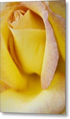 Yellow Rose Metal Print by Lana Enderle