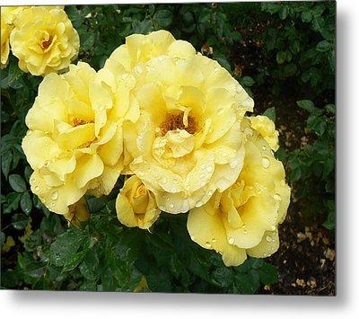 Yellow Rose Of Pa Metal Print by Michael Porchik